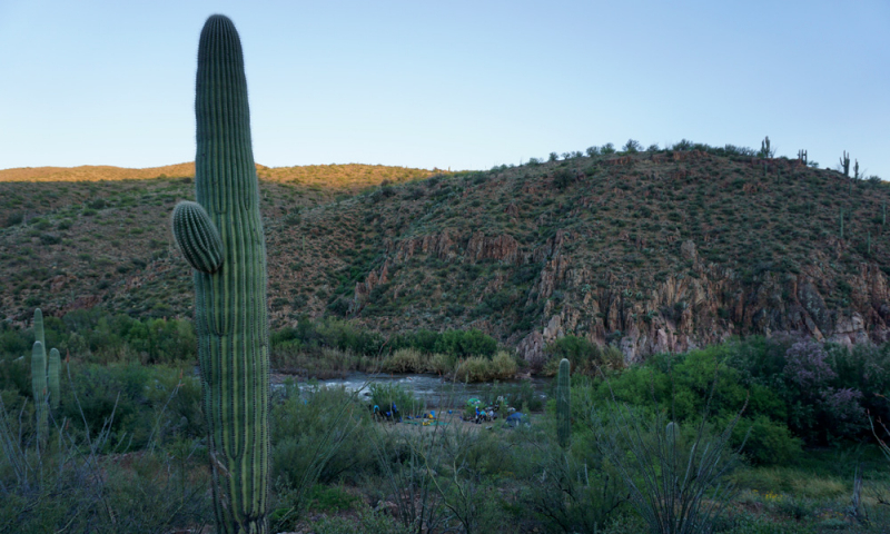 salt-river-arizona-024